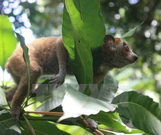 Loài thú nào sẽ được vào Công viên hơn 7.300 tỷ đồng ở Ninh Bình? - ảnh 1