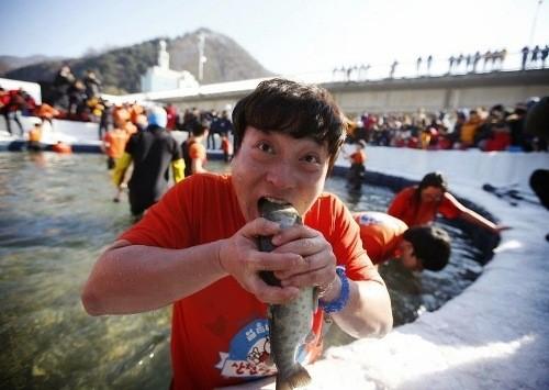 Bắt cá hồi bằng tay không trên sông băng Hàn Quốc - ảnh 5