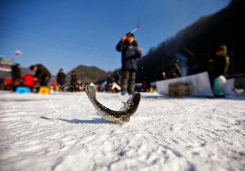Bắt cá hồi bằng tay không trên sông băng Hàn Quốc - ảnh 6