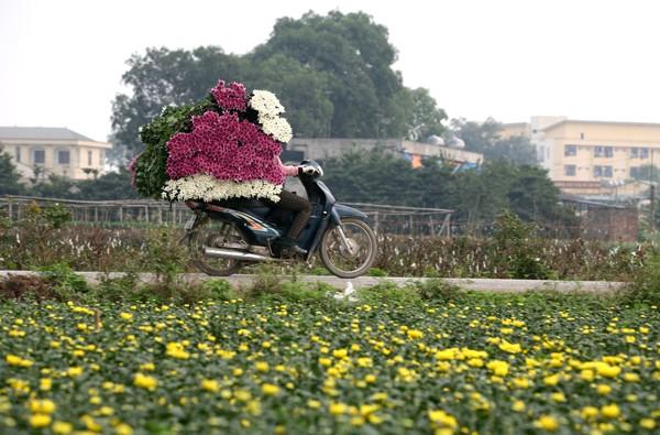Đường đi đến 5 làng hoa nổi tiếng dịp giáp Tết - ảnh 2