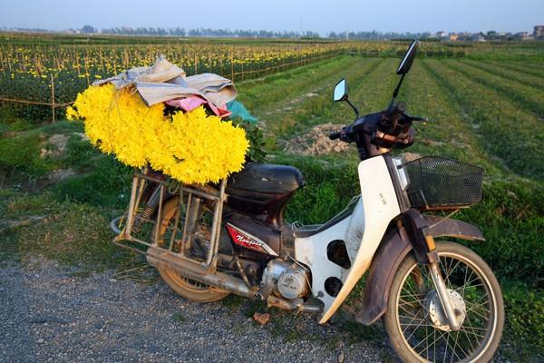 Đường đi đến 5 làng hoa nổi tiếng dịp giáp Tết - ảnh 6