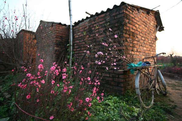 Đường đi đến 5 làng hoa nổi tiếng dịp giáp Tết - ảnh 7