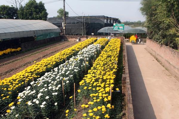 Đường đi đến 5 làng hoa nổi tiếng dịp giáp Tết - ảnh 9