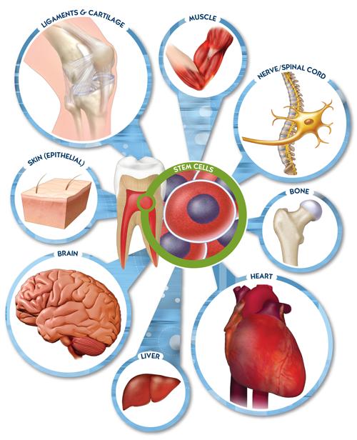 ung thư,điều trị,thuốc,bệnh nhân,cơ thể,bác sĩ,nghiên cứu,sức khỏe, tế bào gốc, ung thư, Parkinson, Alzheimer, chấn thương tủy sống, đột quỵ, bệnh tim, đái tháo đường - ảnh 1