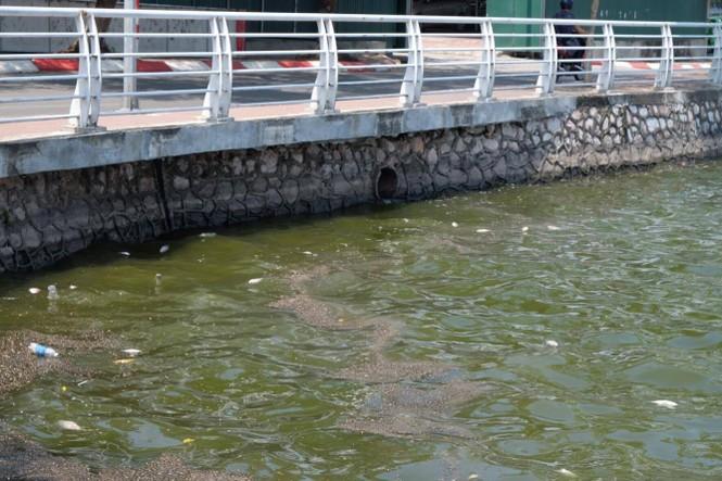 hồ tây, hà nội, ô nhiễm, cá chết - ảnh 10