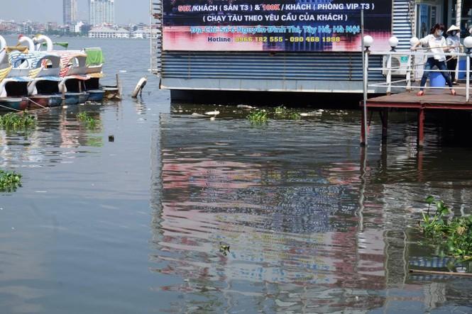 hồ tây, hà nội, ô nhiễm, cá chết - ảnh 4