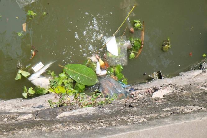 hồ tây, hà nội, ô nhiễm, cá chết - ảnh 2