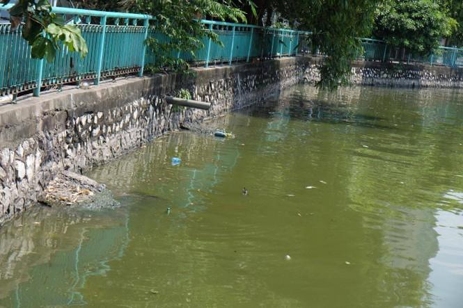 hồ tây, hà nội, ô nhiễm, cá chết - ảnh 3