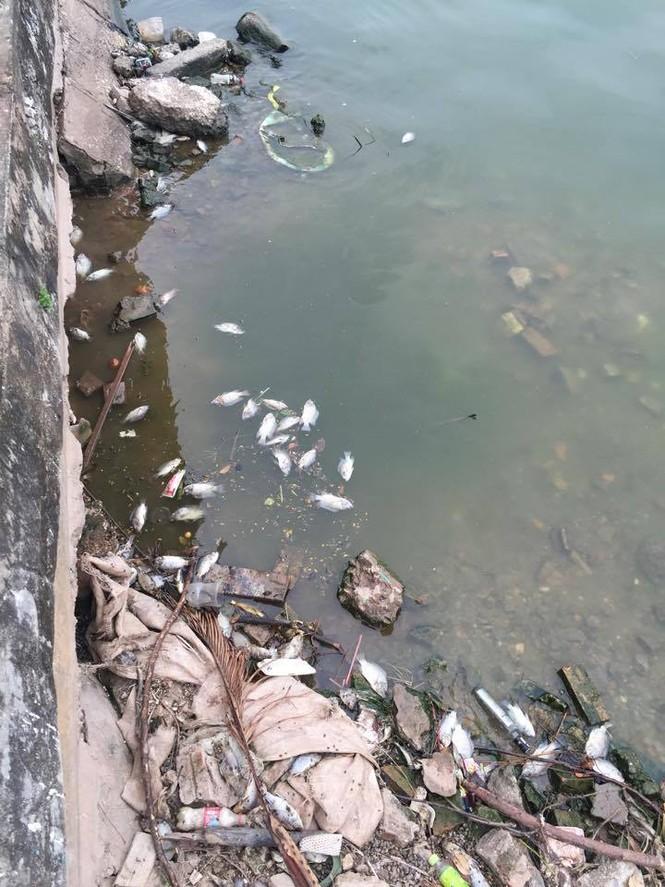 cá chết, cá chết hồ tây, hồ tây xả thải, cống xả, nước ô nhiễm - ảnh 1