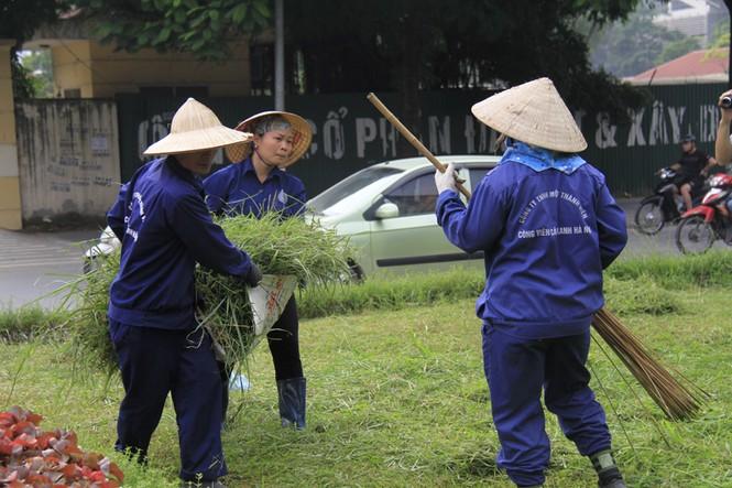 cắt cỏ trở lại - ảnh 7
