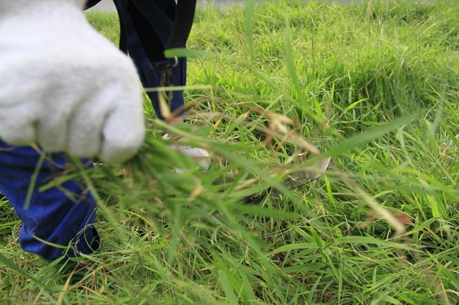 cắt cỏ trở lại - ảnh 4