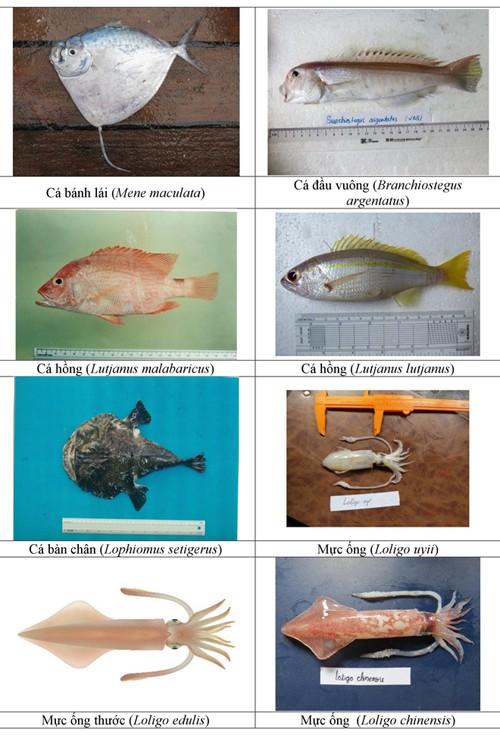 Hình ảnh các loại hải sản sống ở tầng đáy 4 tỉnh miền Trung - ảnh 15