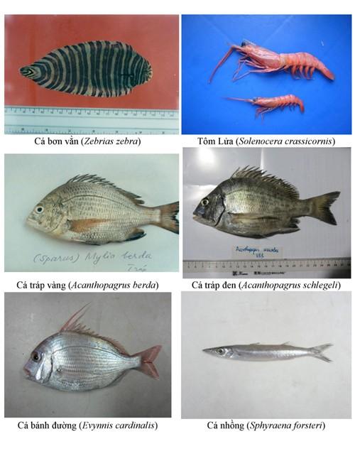 Hình ảnh các loại hải sản sống ở tầng đáy 4 tỉnh miền Trung - ảnh 6