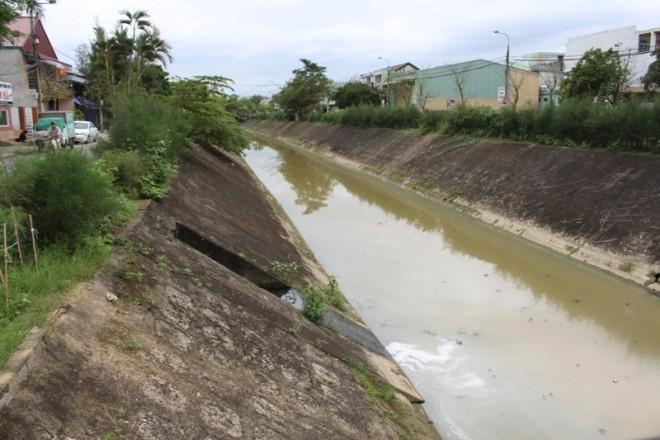 Cá chết trắng kênh ở Đà Nẵng - ảnh 4