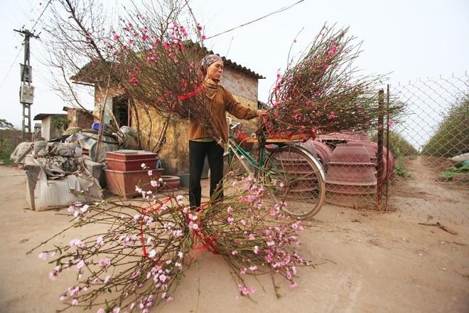 Cận cảnh làng hoa Hà Nội vào mùa Tết - ảnh 10