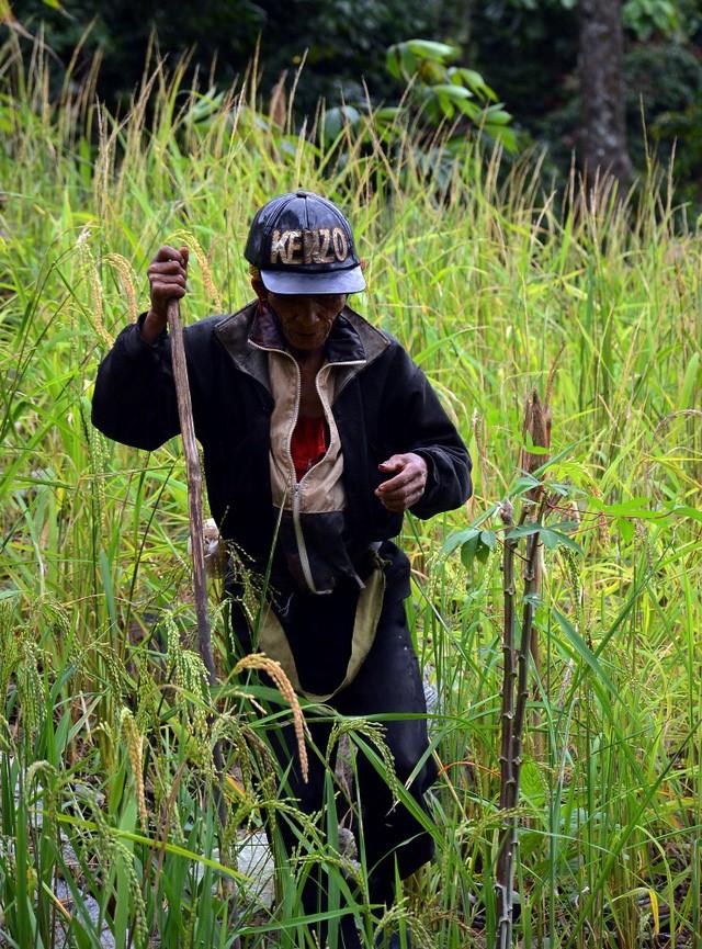 Ông lão 20 năm ở ẩn nơi rừng thẳm Quảng Ngãi - ảnh 1