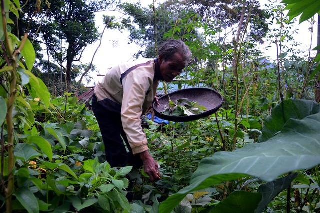 Ông lão 20 năm ở ẩn nơi rừng thẳm Quảng Ngãi - ảnh 4