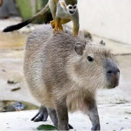 """Khoảng khắc kỳ thú khi động vật thích """"quá giang"""" - ảnh 10"""