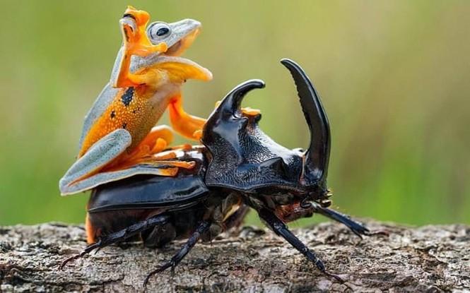 """Khoảng khắc kỳ thú khi động vật thích """"quá giang"""" - ảnh 6"""