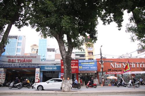 Hàng loạt cây xà cừ ở Hà Nội bị lột vỏ - ảnh 6
