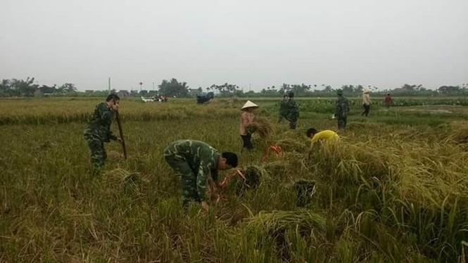 Đoàn viên, thanh niên giúp dân gặt lúa  - ảnh 2