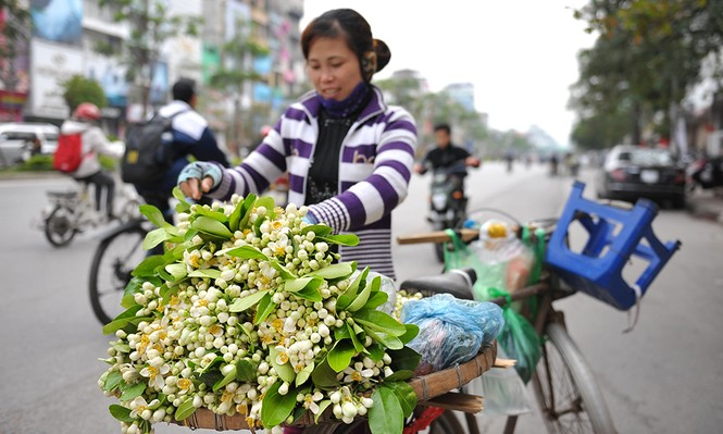 Đường phố Hà Nội ngát hương hoa bưởi - ảnh 4