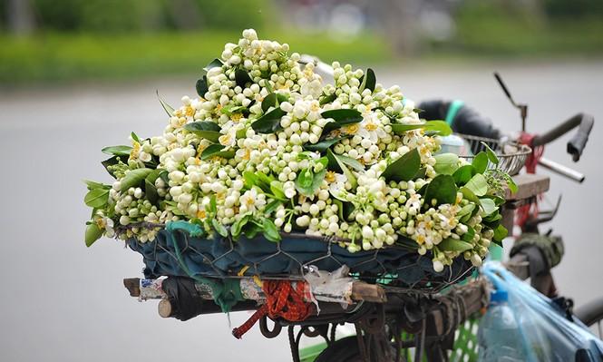 Đường phố Hà Nội ngát hương hoa bưởi - ảnh 2