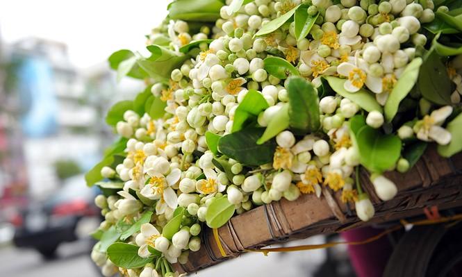 Đường phố Hà Nội ngát hương hoa bưởi - ảnh 8