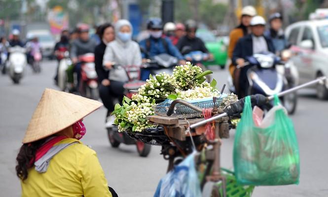 Đường phố Hà Nội ngát hương hoa bưởi - ảnh 1